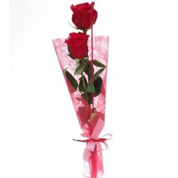 Rosa para regalo