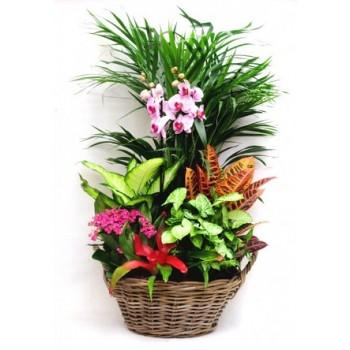 Cesta de planta con orquidea.