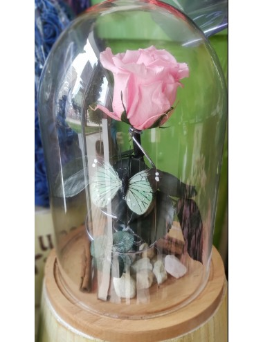 Cupula de rosas preservadas